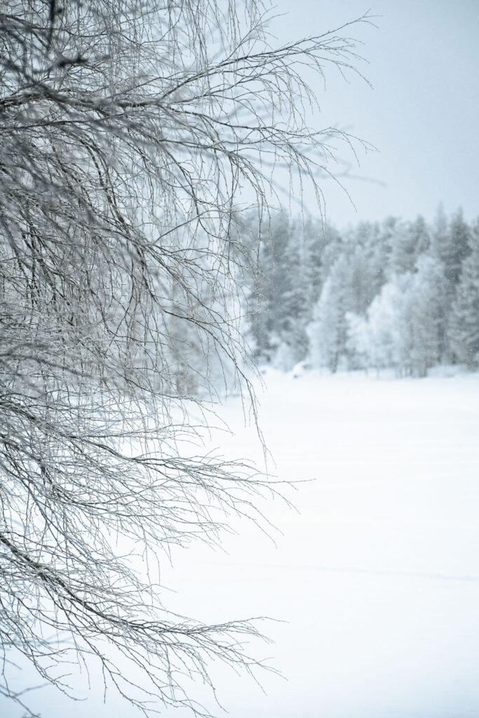 Paysage enneigé d'un matin d'hiver en Finlande